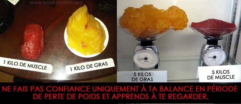 balance muscle graisse