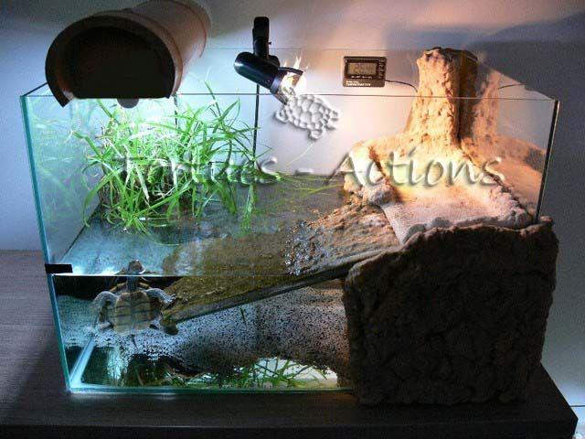 deco aquarium tortue