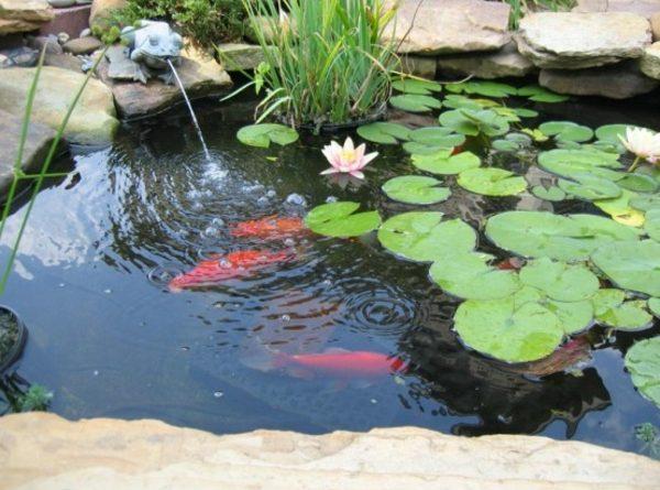 decoration pour bassin poisson