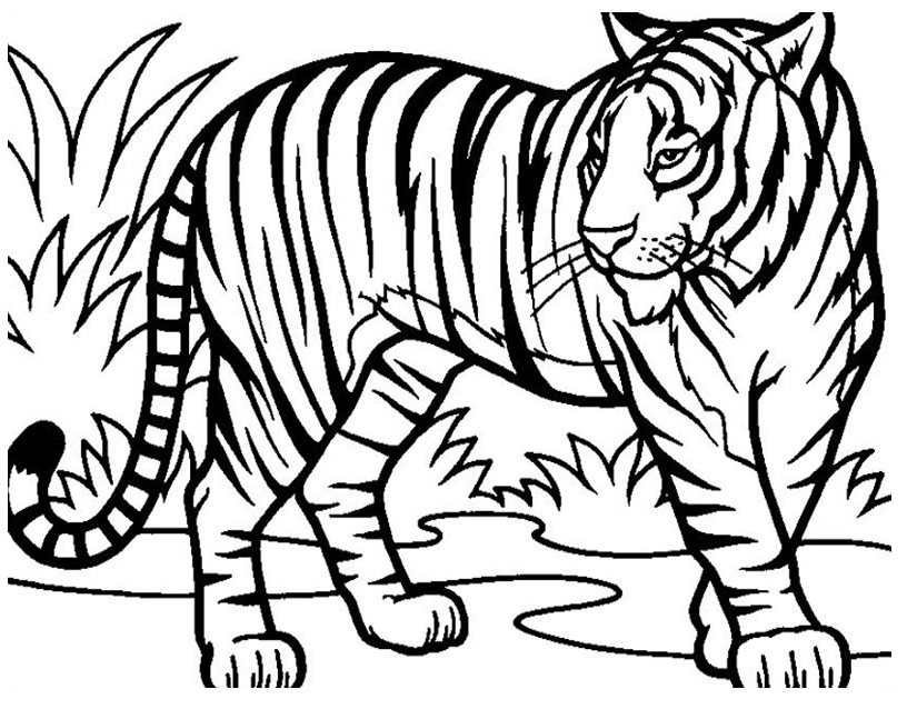 dessin a colorier tigre