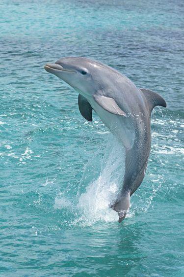 dolphin ecran noir